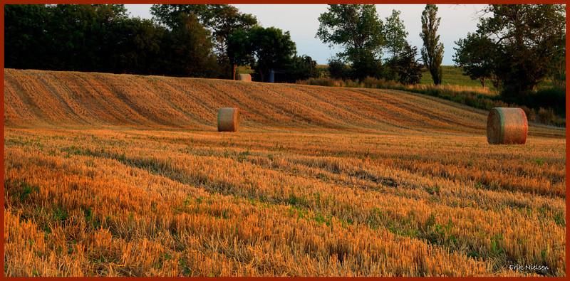 Høstmarker