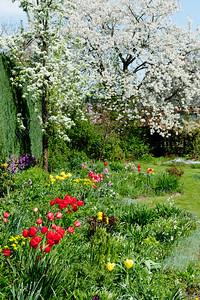 spring garden,lente tuin,jardin de printemps
