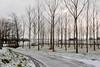 winter,hiver