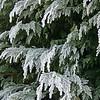 Hoar frost, Arddleen, Wales - December 2012