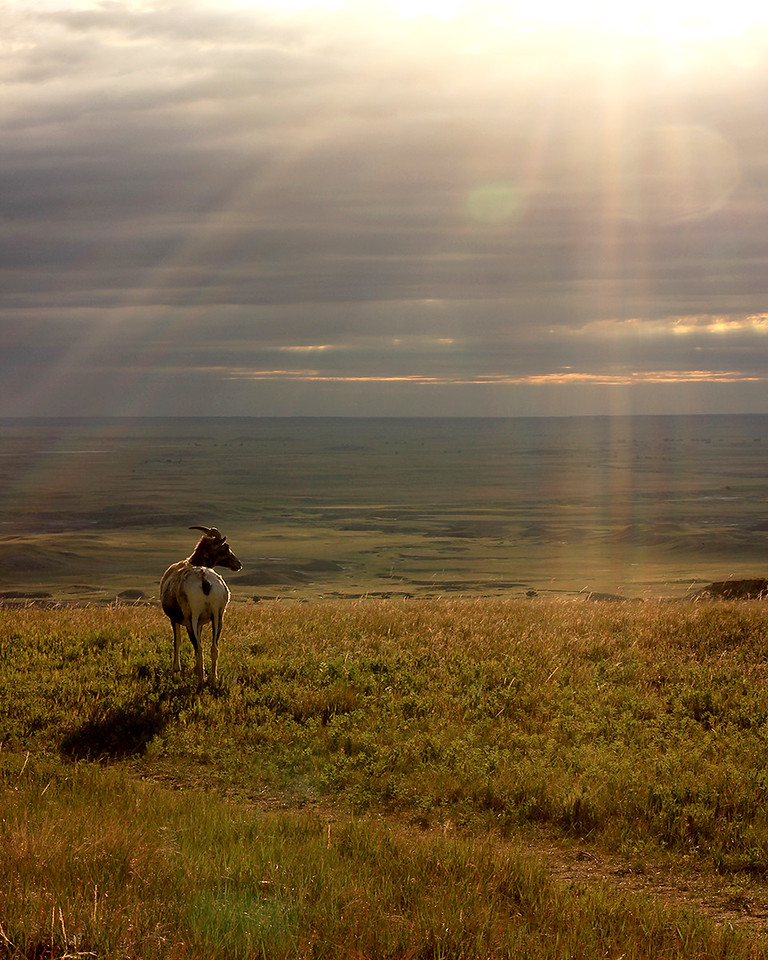 """...the earth is a continually sensuous thing, out there where one can see it with minimal interference."" - Merrill Gilfillan, ""Magpie Rising.""<br /> <br /> Sunrise, Badlands National Park, SD."