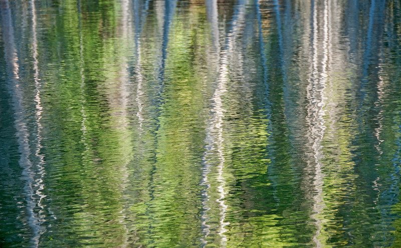Summer aspen reflections