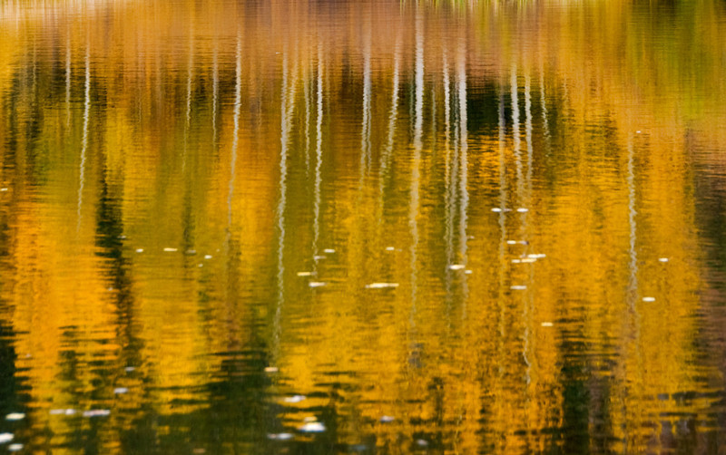 """On Golden Pond"""