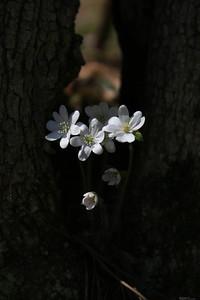 IMG_8415©2010 Nature's Art