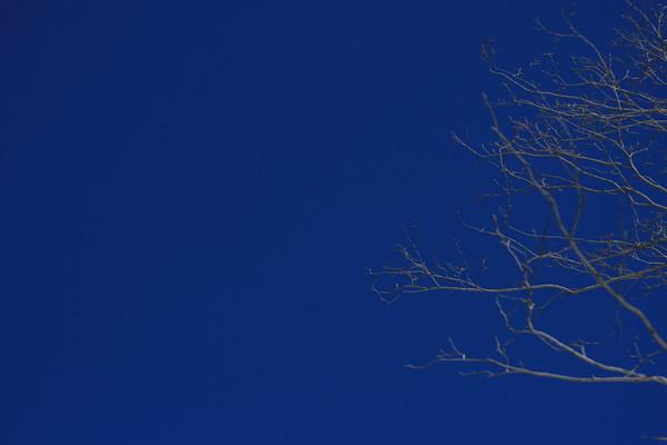 IMG_4759 Tree Silhouette
