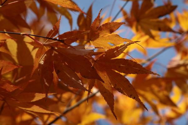 IMG_3618 Leaves Autumn 2009 0001