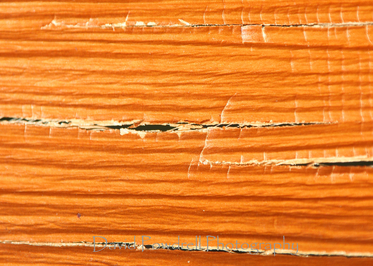 Palm frond texture.
