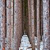 Haunted Pines