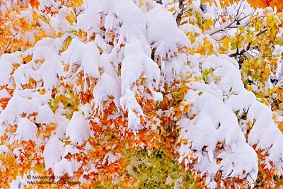 Colorado Autumn Snow