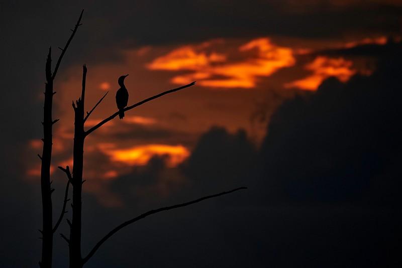 Sunset View #3