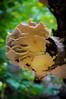 Mushroom Lion_4