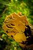 Mushroom Lion_2