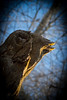 Wood Bird_903