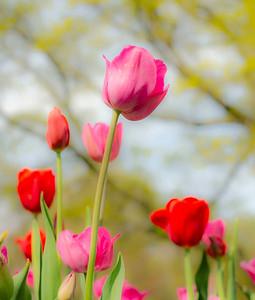 Spring in Soft Focus