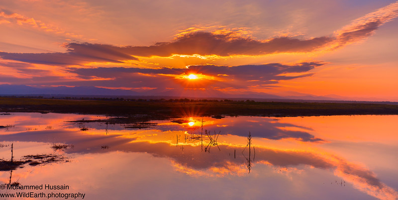 Colorado Summer Sunset -Rocky Mountain Arsenal Wildlife Refuge, CO