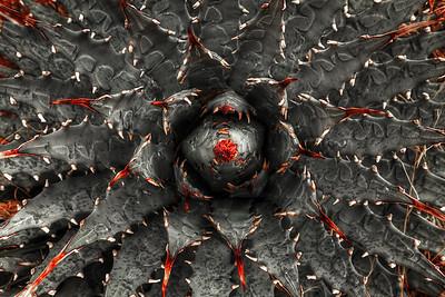 Eye of Agave