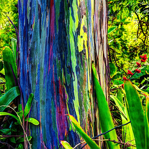 Psychedelic Tree