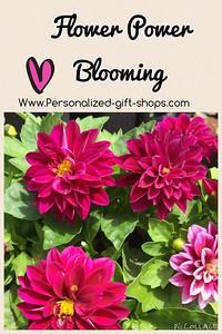 Flower Power Blooming