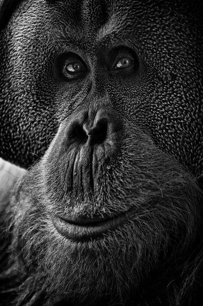 animal portraits bw  08©