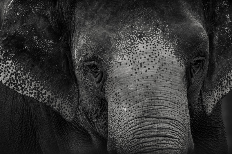 animal portraits bw  06©