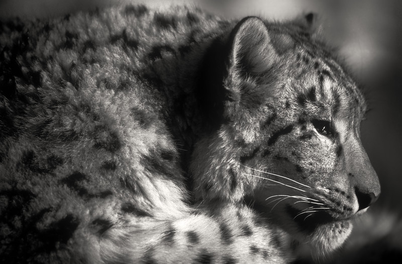 animal portraits bw  03©