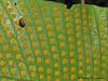 Fern sporophytes