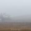 Oak, Fence, Fog