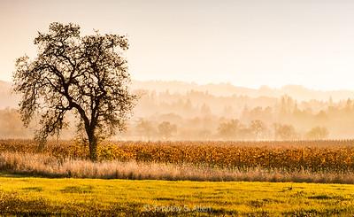 Early Fall Morning