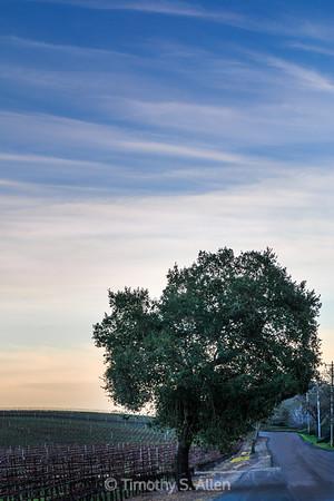 A Lone Tree at Dusk