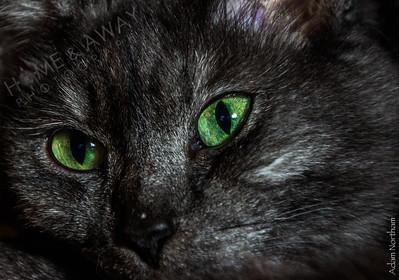 Mama Kitty