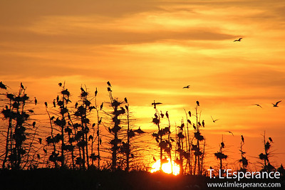 Sunset with birds a plenty just off French Village Harbour, St. Margaret's Bay, NS.