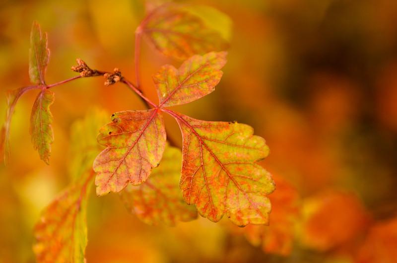 Fall hues