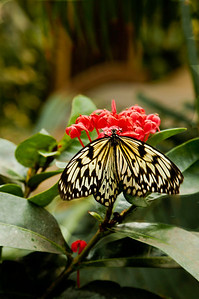 butterfly_colo09_49