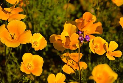 flower_aptrail08_3484