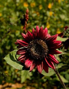 flower_4253