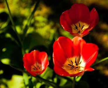 flower_4410_0038