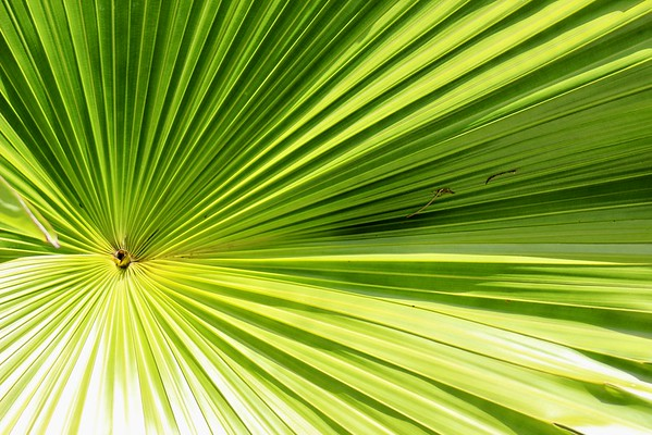 Frond of Florida