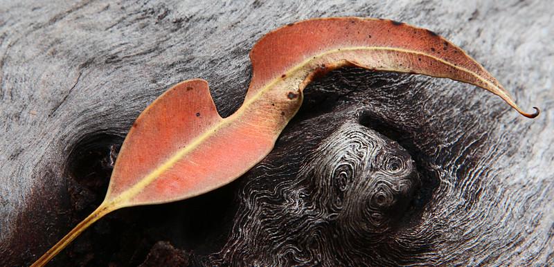 Leaf 'n' Log