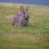 The Bunny at Primrose Lane