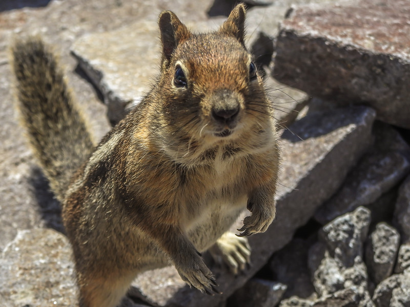 Hey Bub, Can you spare me some food?