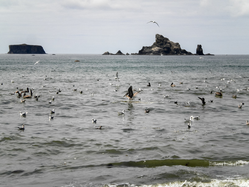 Flock of Birds Rialto Beach