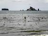 Flock of Birds Rialto Beach