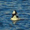 Capitol Lake 022216-012