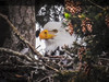 Eagle Nest Tony Porter Photography-9-3