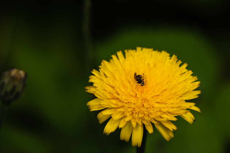 A little bit of Nature