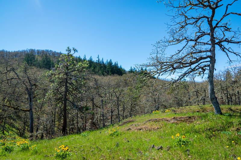 Memaloose Hike