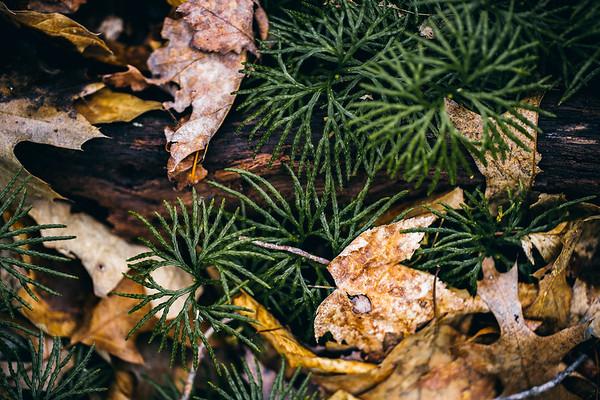 Forest Floor Ver 1