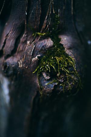Forest Floor Ver 6