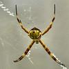 Aranha em Teresópolis