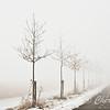 _MAY6251-1_Row of trees